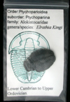 Attributed Trilobites